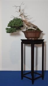 John B's kifu juniper