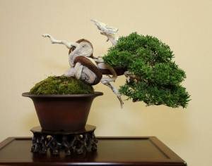 John also won Best Shohin award for this superb juniper