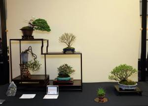 John Armitage's Best Shohin Display