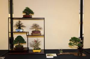 Award of Merit - Shohin Display went to this exhibit of Andy Jordan's