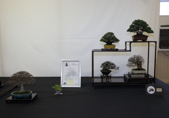 Best Shohin Display with awards and certificate IA4A3859