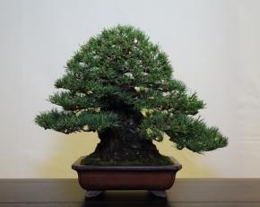 Best Tree Pot combination - Bob van Ruitenbeek (Holland) Red